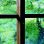 梅雨はノミ・ダニが増える?!犬、猫、大切なペットを守るには!!