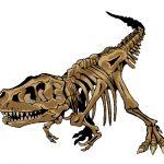 恐竜の化石のイラスト