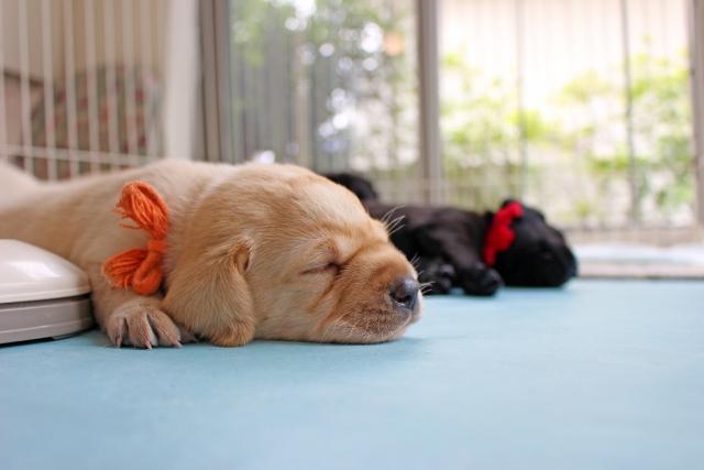 涼し気に昼寝する子犬