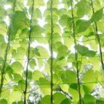 グリーンカーテンにおすすめの種類、種まき時期や必要なもの、注意点は?
