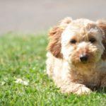 犬の虫よけ対策。市販品の注意点と手作りスプレーの危険性は?