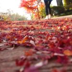 御船山楽園の紅葉見頃はいつ?ライトアップ期間と周辺観光情報。
