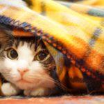 電気毛布の選び方、掛け、敷きの違いや電磁波カット、洗い方や干し方は?