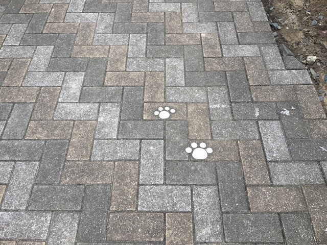 コンクリートにかかれた猫の足跡
