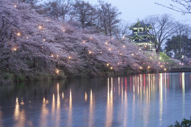 高田公園の桜ライトアップ