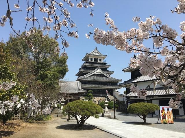中津城と桜