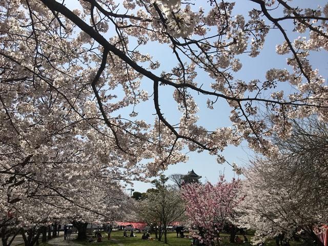 中津城と花見