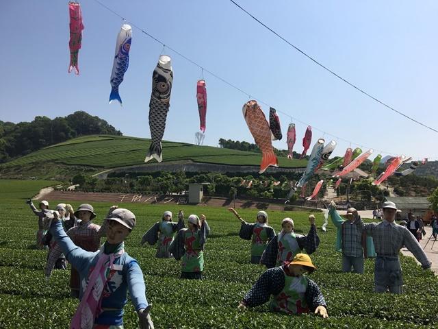 千財農園の茶畑とこいのぼり
