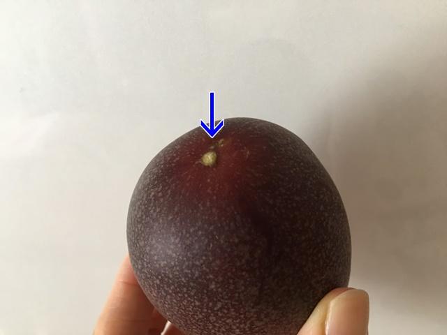 パッションフルーツのヘタ