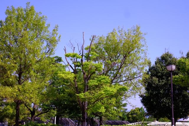 公園の木々と空