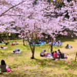 桜公園でお花見