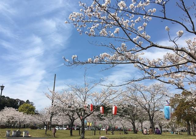 道の駅おおすみの桜