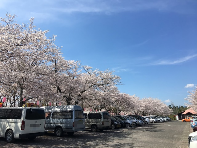 忠元公園の桜