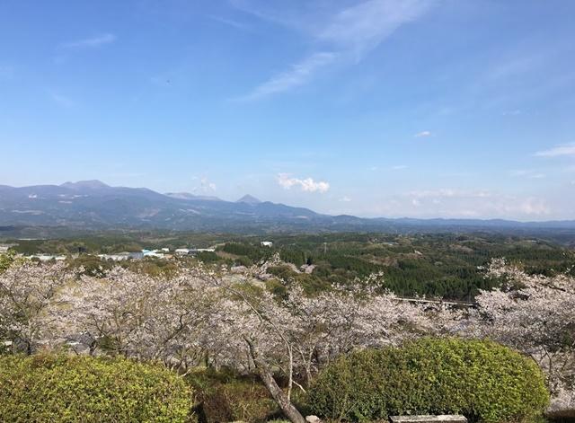 霧島連山と桜