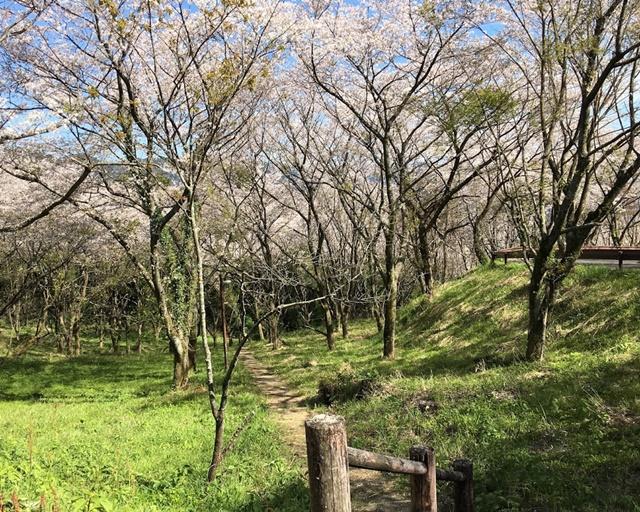 桜の中の遊歩道