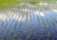 水を張った田んぼ